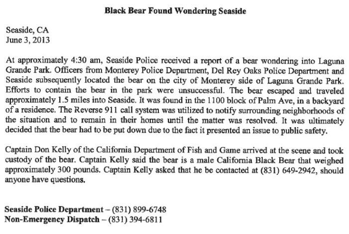 Black Bear Put Down in Seaside