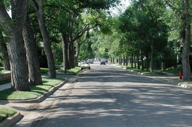 Database Captures Urban Tree Sizes & Growth Rates Across United States
